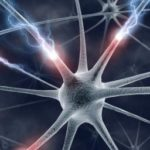 Researchers identify key brain cells that drive circadian rhythm