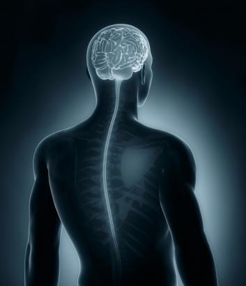 Brain injury recovery may be hampered by commonly used drugs