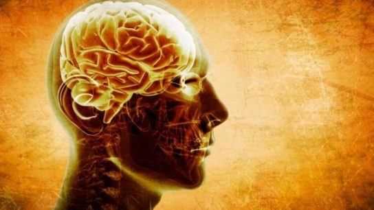 Could brain size predict risk of cognitive impairment?