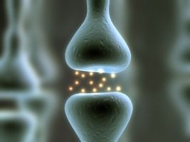Mouse Study Suggests More Complex Role of Serotonin for Mood