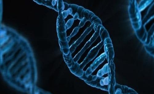 Uncovering The Genetic Roots Of Autism