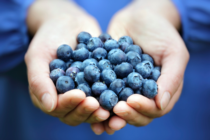 hands holding a fistful of blueberries