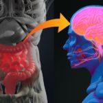 gut brain connection
