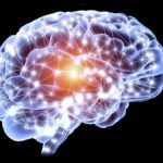 Neural networks in the brain