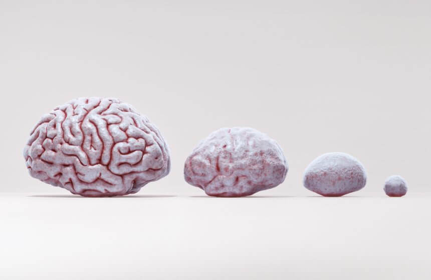 4 brains ranging in sizes.